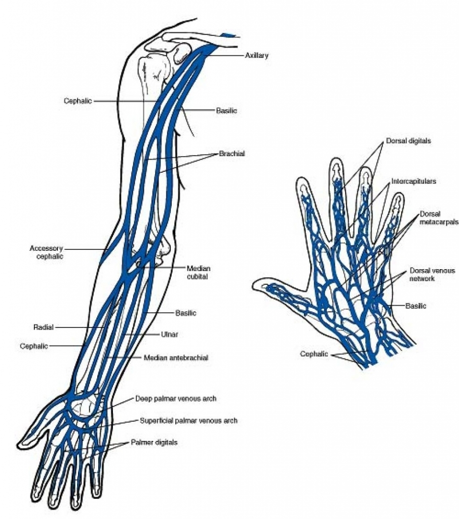 Arm Veins Diagram Schematic Library