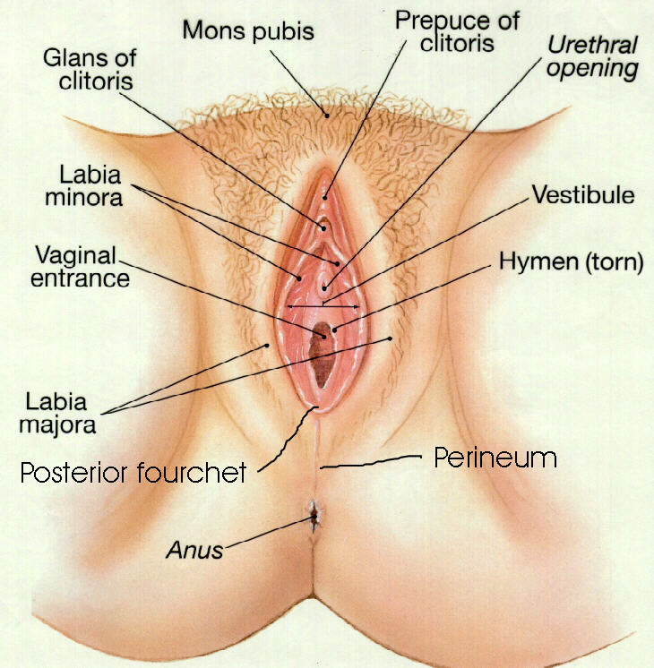 Female reproductive system locations and functions of the female reproductive organs earth's lab