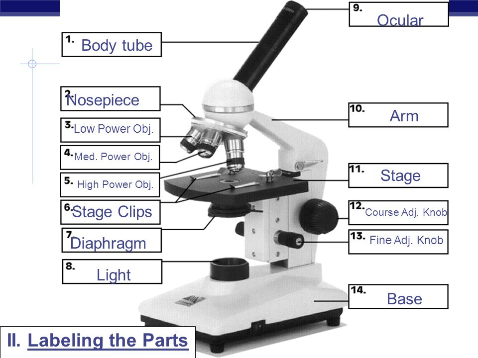 Compound Light Microscope Labeled - Made By Creative Label