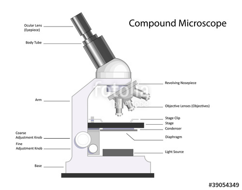 Compound Microscope With Label 450 Labeled Microscope Diagram Made