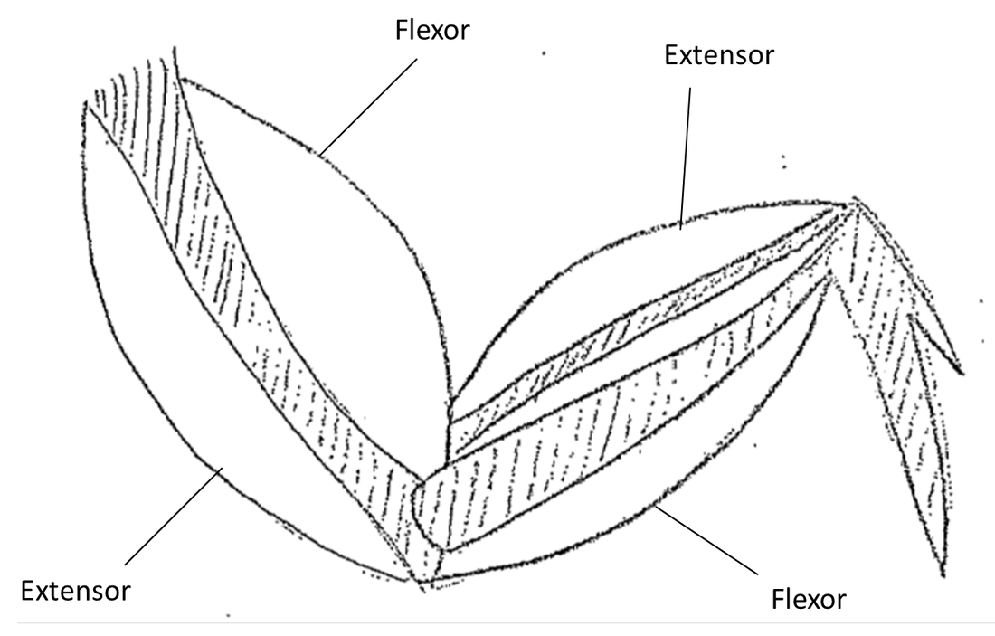 labeled diagram of chicken wing 5533555 orig