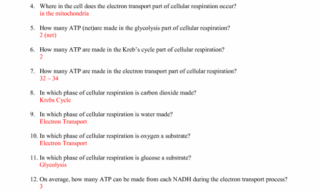 Cell Cycle Labeling Answers Plasma Membrane Coloring Worksheet